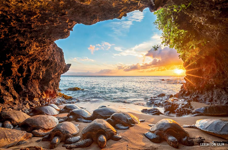 wildlife photography contest turtles in cave by leighton lum