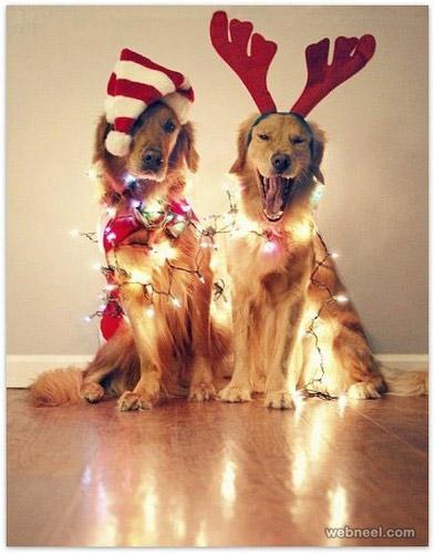 reindeers or reindogs?