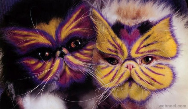 painting on cats fur