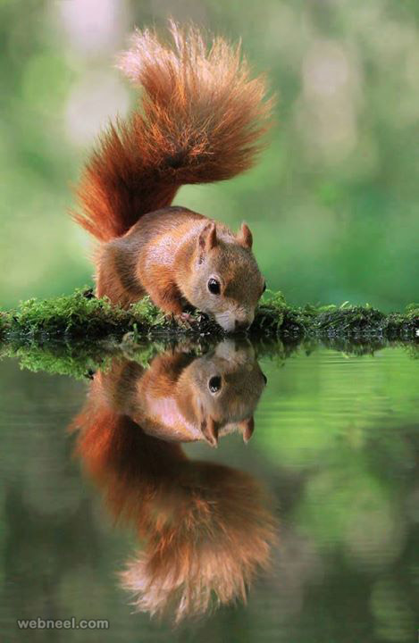 beautiful squirrel wildlife photography by arena animation
