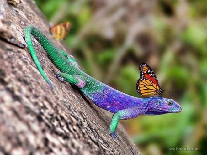 beautiful wildlife photography by amazing photography