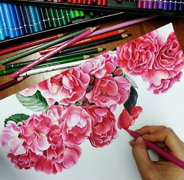 rose color pencil drawing by angiengart