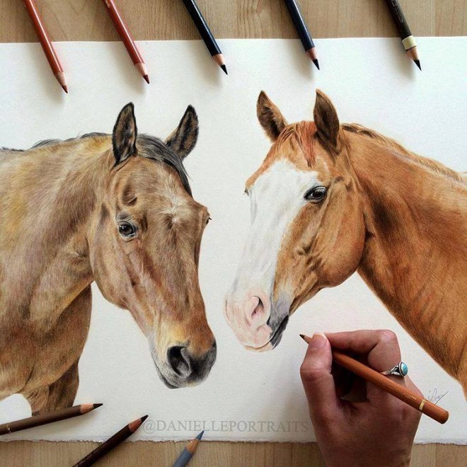 horse animal color pencil drawing by danielle portraits