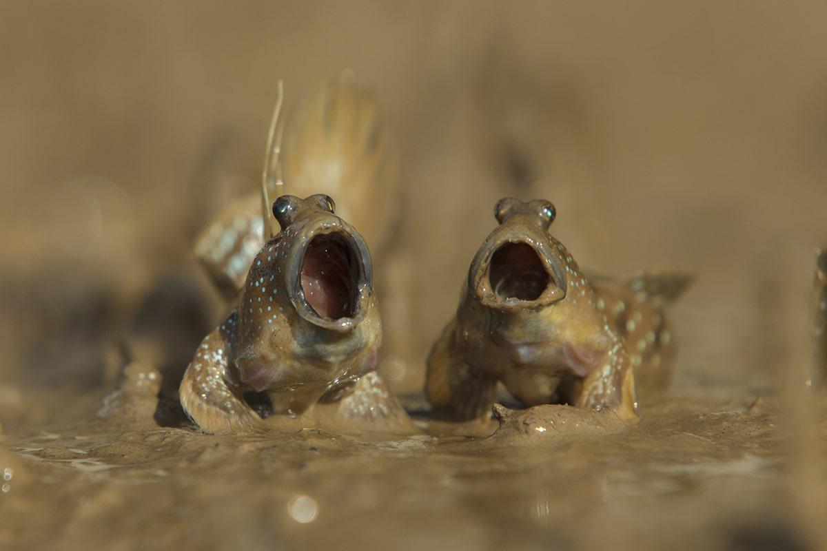 comedy wildlife photographer award by daniel trim