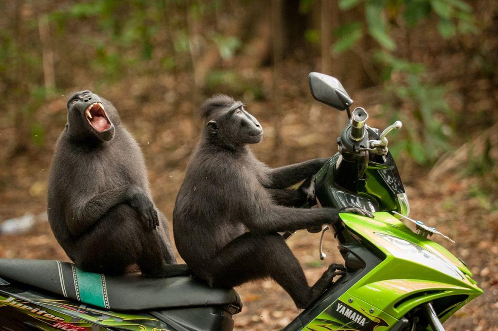 comedy wildlife photographer award by katy laveck