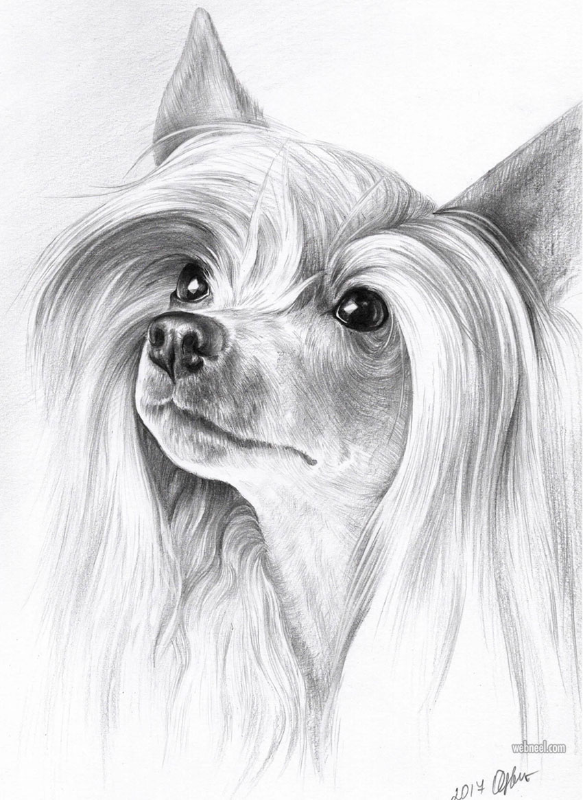 dog pencil drawing by olga tsvetkova