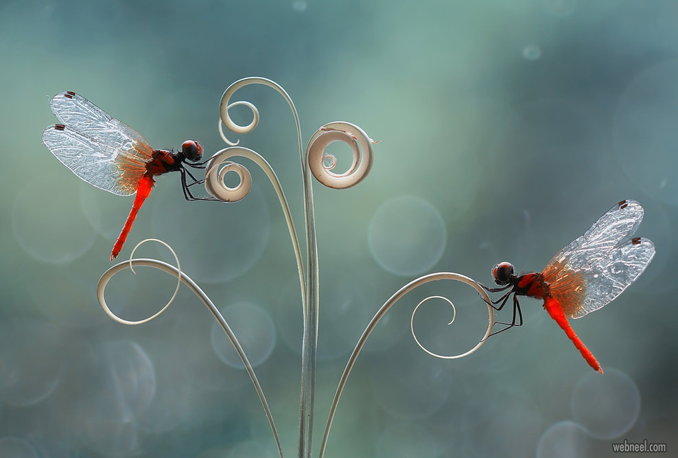 beautiful macro photography