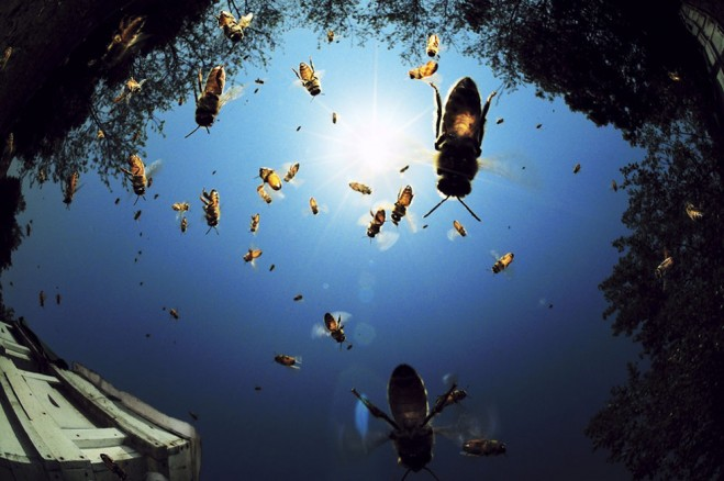 national geographic best award photograph (3)