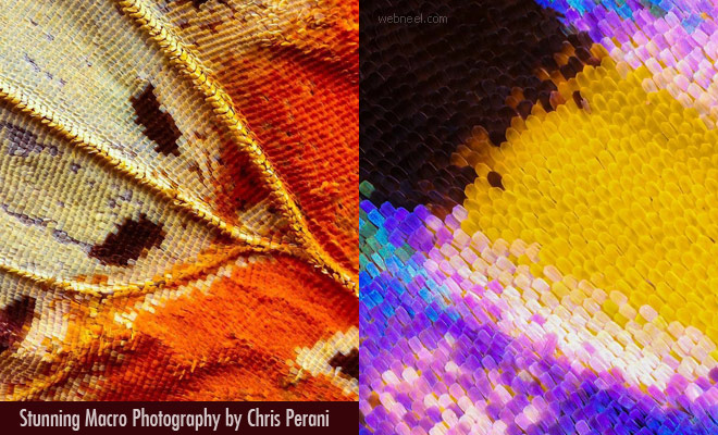 Never Seen Before Butterfly Wings Macro Photography by Chris Perani