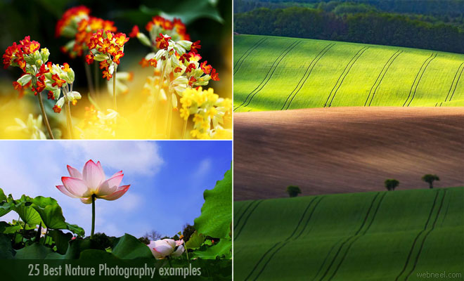 25 Stunning Nature Photography examples from famous photographers around the world
