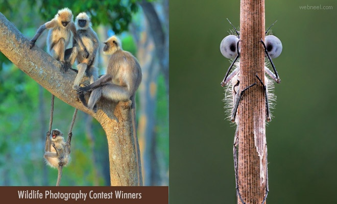 12 Award Winning Photographs from 6th Comedy Wildlife Photography Contest