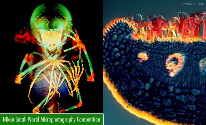 Nikon Small World Micro photography Competition | 30 April 2021