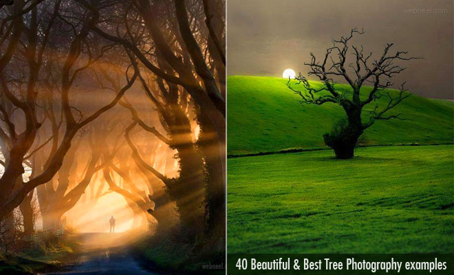 40 Beautiful Tree Photography examples from around the world