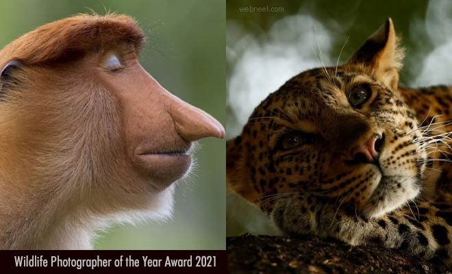Wildlife Photographer of the Year 2021 - Photography Contest entries by 30 April 2021