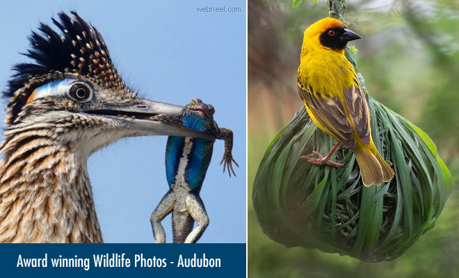 Audubon Announces the Winners of the 2020 Wildlife Photography Contest