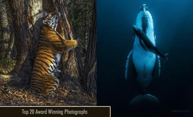 Top 20 Award Winning Photographs of the Year 2020 to kindle your creativity