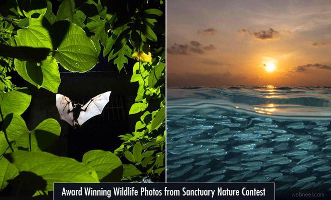 Award Winning Wildlife Photographs from Sanctuary Nature Photography Contest