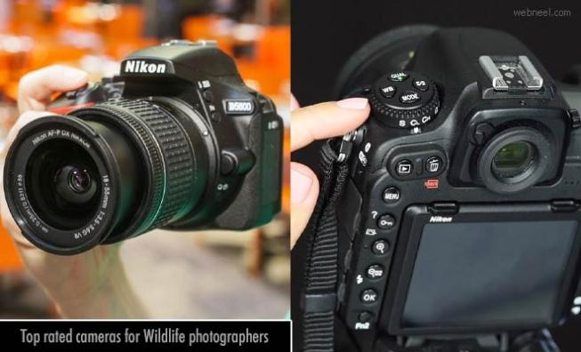 10 Top-rated cameras for Wildlife photographers - Camera Review