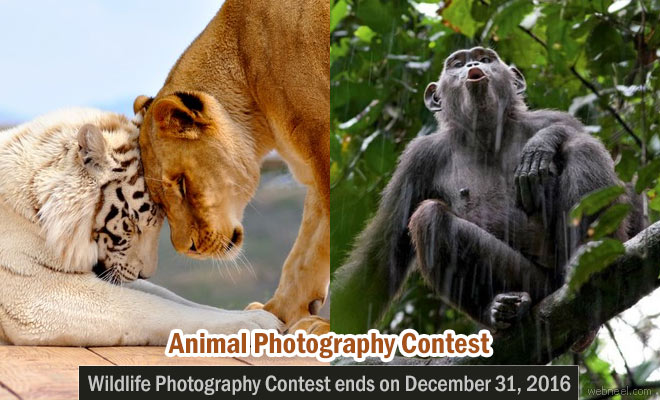 Animal Behavior Photo Contest 2016 - submissions open till Dec 31 2016