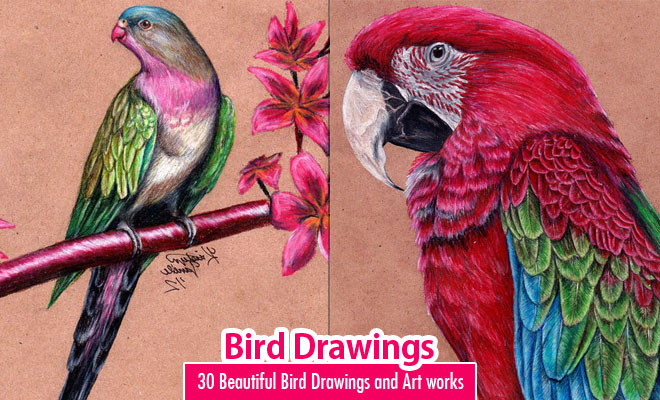 40 Best and Beautiful Bird Drawings and Artworks - Part 2