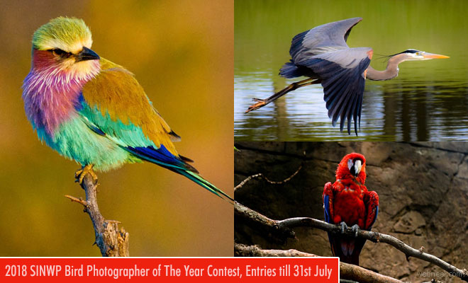 International Bird Photographer of the year - Photography Contest | entries till 31 July 2018