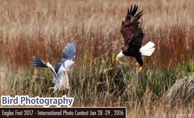 International Photography Contest - Annual Eagles Fest 2017 starts on Jan 28, 2017