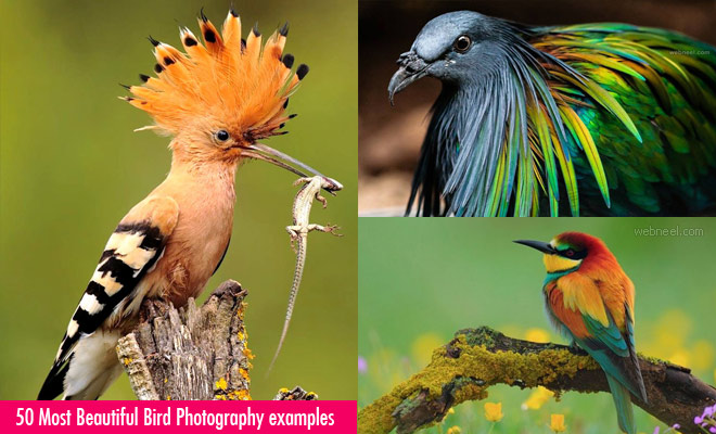 24 Beautiful Bird Photography examples and ideas - New Bird Photos