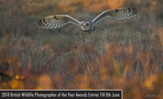 British Wildlife Photography Contest - entries by 8 June 2018