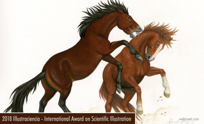 International Award for Scientific Illustration - Art Contest 20 June 2018