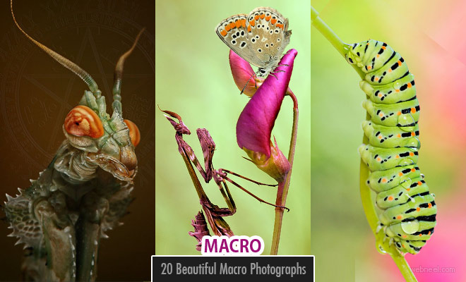 100 Beautiful Macro Photography examples and ideas - Part 4