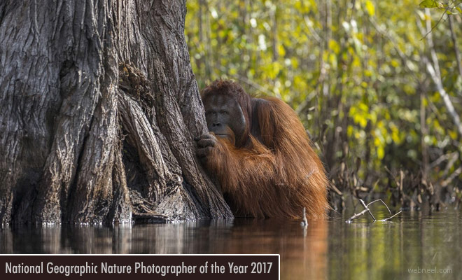 NatGeo Nature Photographer of the Year 2017 open for entries - 17 Nov 2017