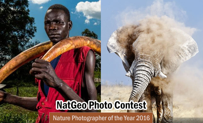 Nature Photographer of the Year 2016 by National Geographic