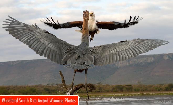 Award winning wildlife photos from Windland Smith Rice Photography contest