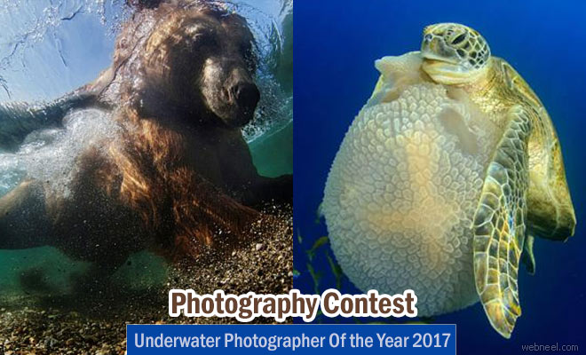 Underwater Photographer Of the Year 2017 - January 2 2017
