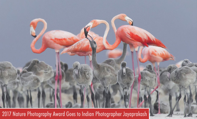 2017 NatGeo Nature Photographer of the Year award goes to Indian Photographer JayaPrakash