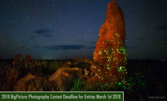 Natural World Photography Competition - Big Picture calling for entries | 1 March 2018
