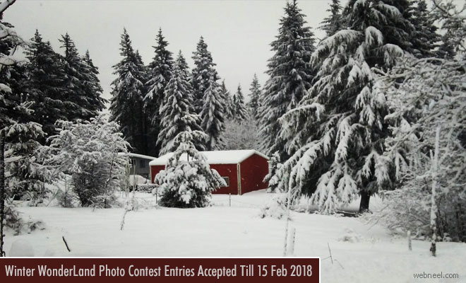 Washington winter Photography Contest - 15 Feb 2018