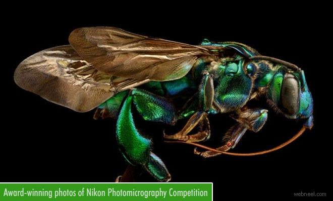 Award-winning Photographs of Nikon Small World Photomicrography Competition