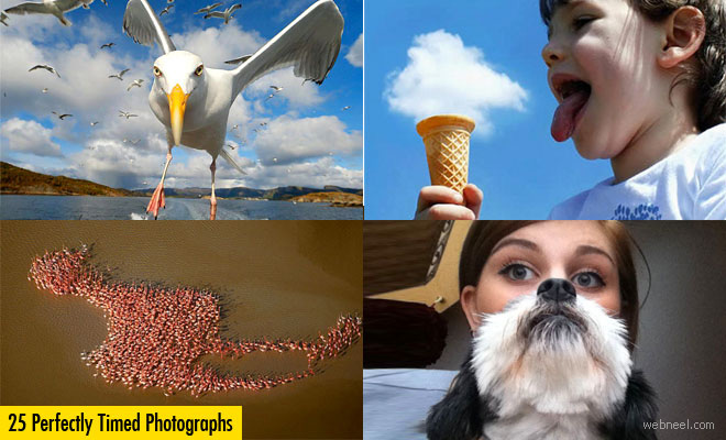 25 Best Perfectly Timed Photos for your inspiration