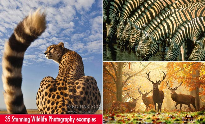 35 Beautiful and Stunning Wildlife Photography examples around the world