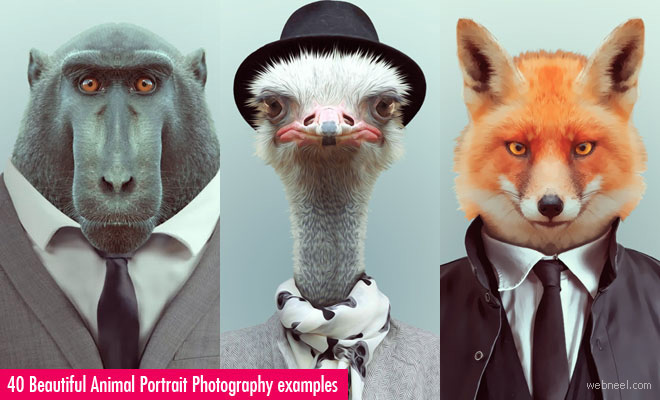 Zoo Portrait - A bizarre photo manipulation project by Yago Partal