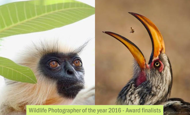 Wildlife Photographer of the year 2016 Award finalists by Natural History Museum