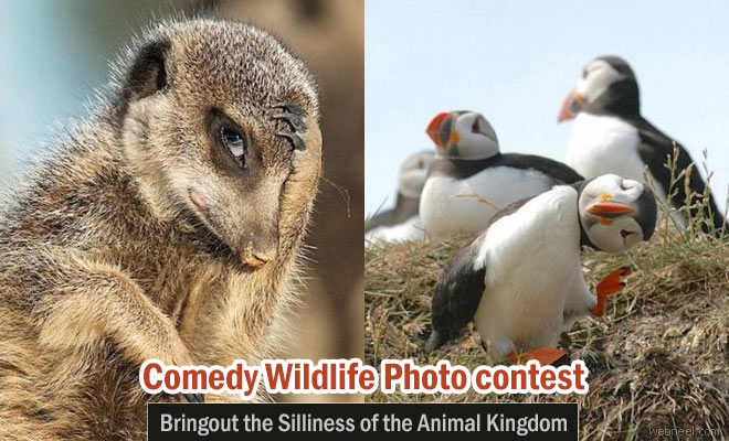 Comedy Wildlife Photography Contest 2016