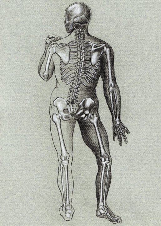 best anatomy study drawing