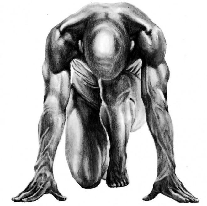 anatomic study