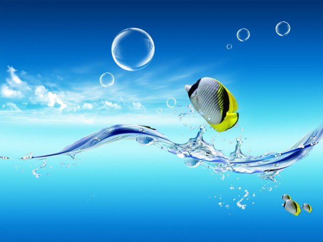 wallpaper fish colorfull webneel com