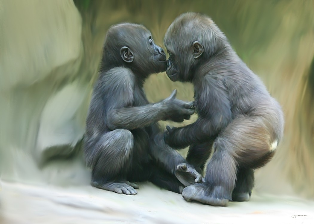 affection of baby gorillas
