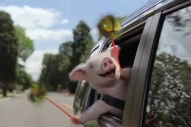 Geico:Piggy - TV Commercial