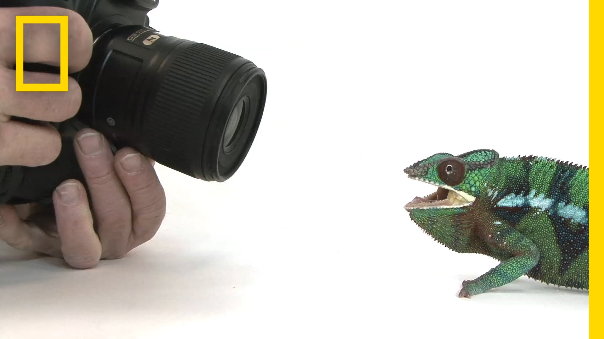 How Hard is it to Photography 12000 animals?