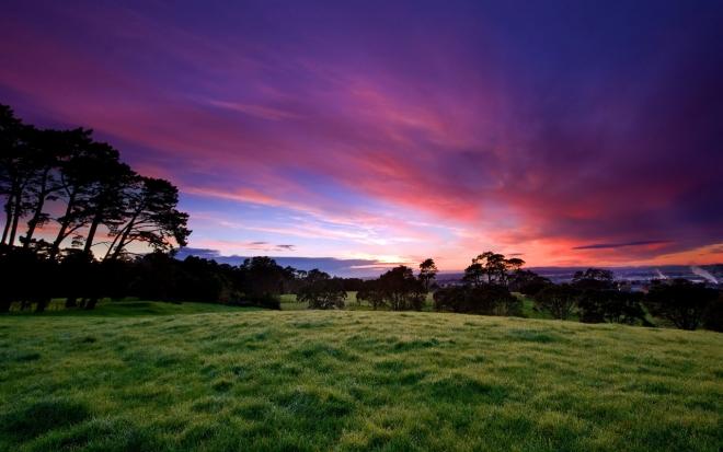 sun rising in the grass land wallpaper